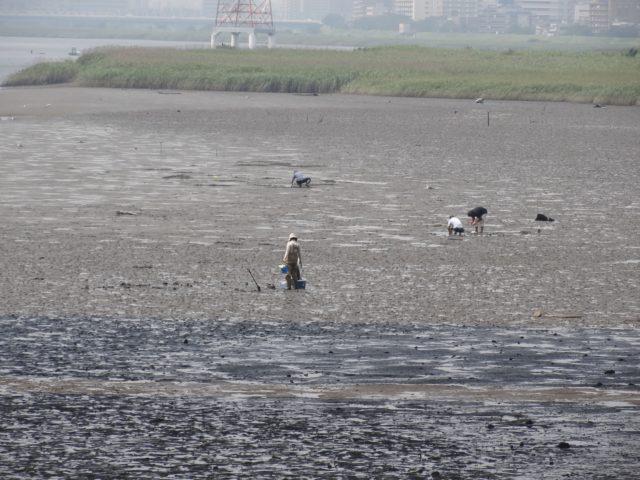 貝類は潮干狩りで獲れます