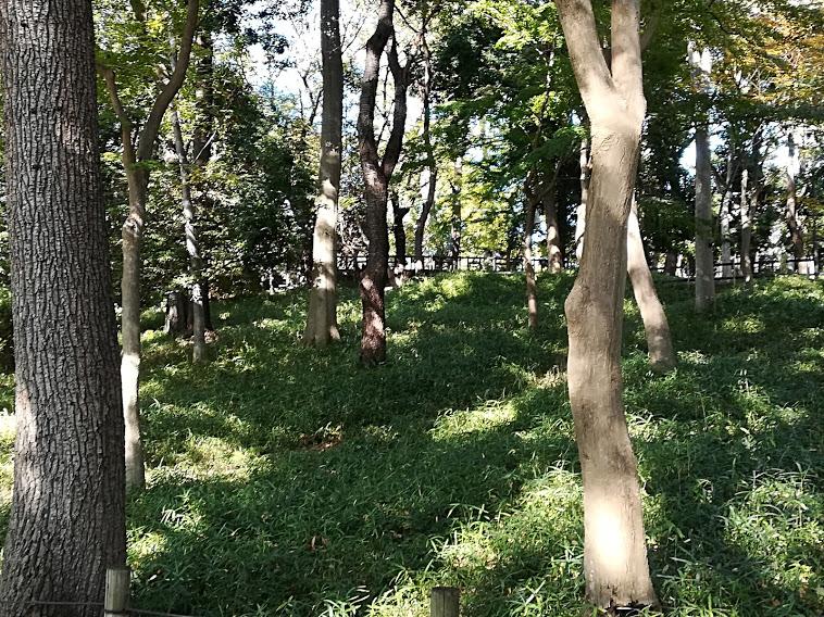 """宝来公園(大田区田園調布)は多摩川台公園、田園調布せせらぎ公園、六郷用水とともに""""雑木林のみち""""といわれる自然散策路"""